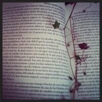 El gusto por observar y leer