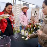Fiesta de la Vendimia: Un acierto para el turismo y productores de Casablanca